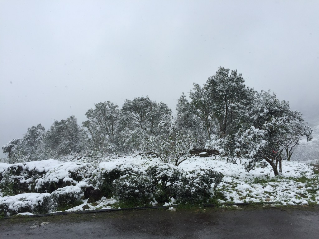 坪林茶園雪景